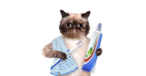 Cat with hand towel over shoulder holding toothbrush and toothpaste